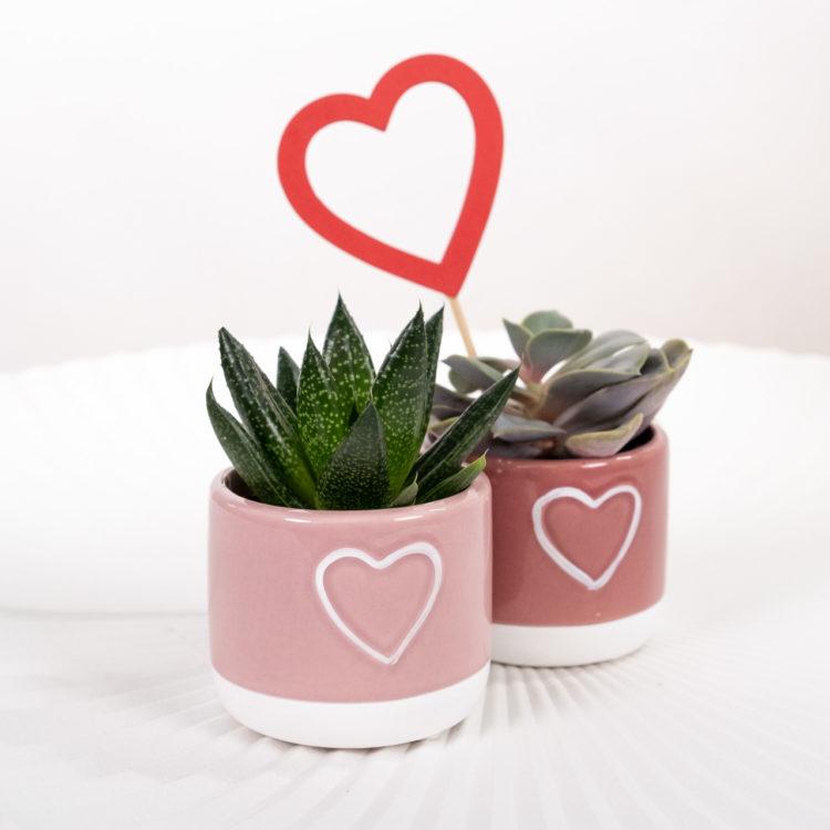 piante San Valentino